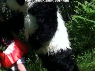 Pouco, vermelho, equitação, capuz, foder, panda, madeira