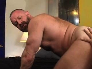 Dois ursos musculares