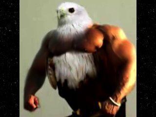 Pássaros com braços