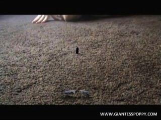 Gigante papoila, vídeo 1