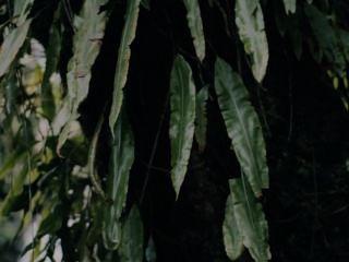 Bonita mesha com ashley nicole (vid erótica)